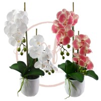 60CM PHAL ORCHID X2 IN WHT POT