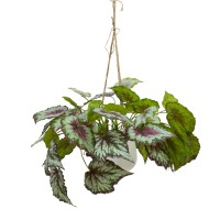 60CM BEGONIA IN HANGING PLANTER