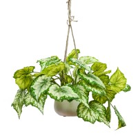 60CM GREEN BEGONIA IN HANGING PLANTER