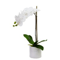 52CM ORCHID W/9 FLR X 1 IN POT