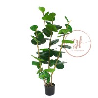 115CM FAT FICUS TREE IN POT