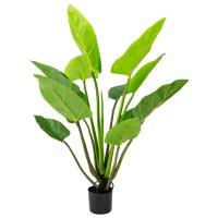 140CM PHILO PLANT