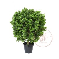 60CM NEW BOXWOOD BALL IN POT